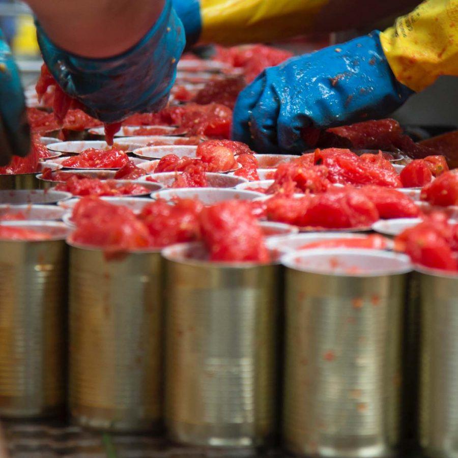 Azienda di Produzione Pomodori - Agriconserve Rega